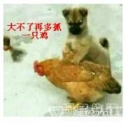抓鸡小能手