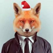 BraveFox